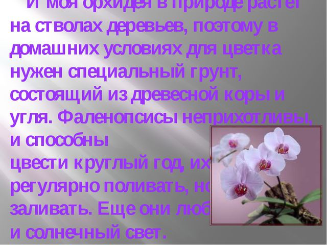 И моя орхидея в природе растет на стволах деревьев, поэтому в домашних услов...