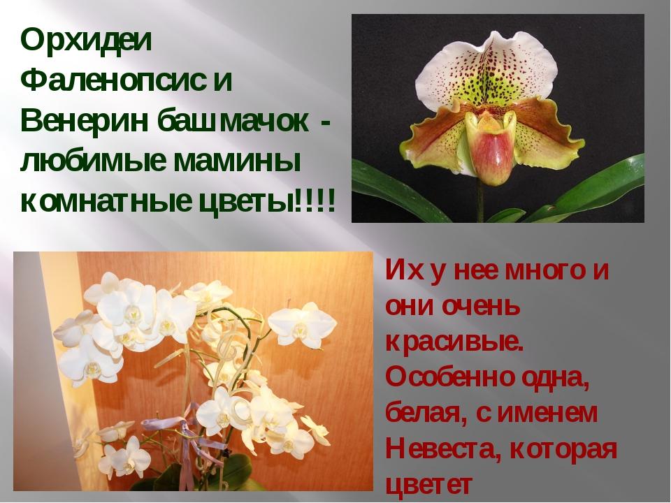 Орхидеи Фаленопсис и Венерин башмачок - любимые мамины комнатные цветы!!!! Их...