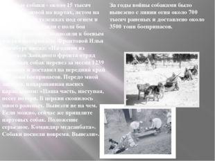 За годы войны собаками было вывезено с линии огня около 700 тысяч раненых и д