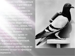 Приучали голубей садиться на цистерны с горючим или бронетехнику – путём еж