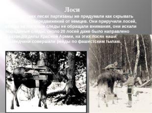 Лоси В белорусских лесах партизаны же придумали как скрывать следы своих пере