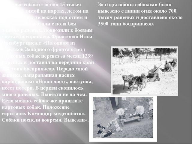За годы войны собаками было вывезено с линии огня около 700 тысяч раненых и д...