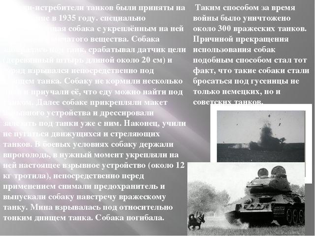 Собаки-истребители танков были приняты на вооружение в 1935 году. специально...