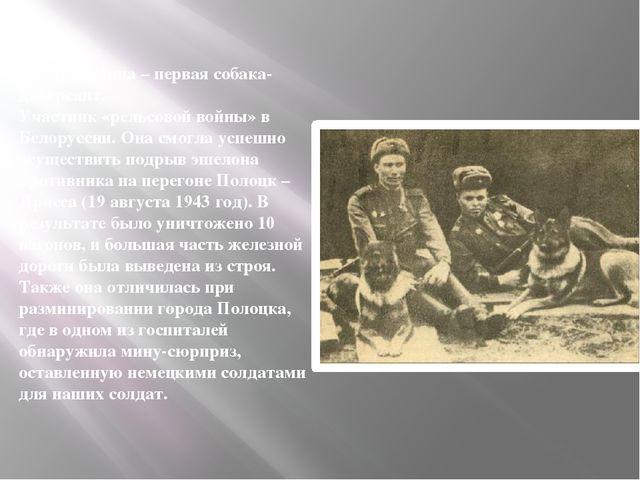 Овчарка Дина– первая собака-диверсант. Участник «рельсовой войны» в Белорусс...