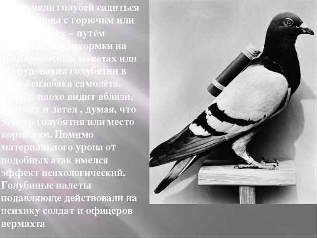 Приучали голубей садиться на цистерны с горючим или бронетехнику – путём еж...
