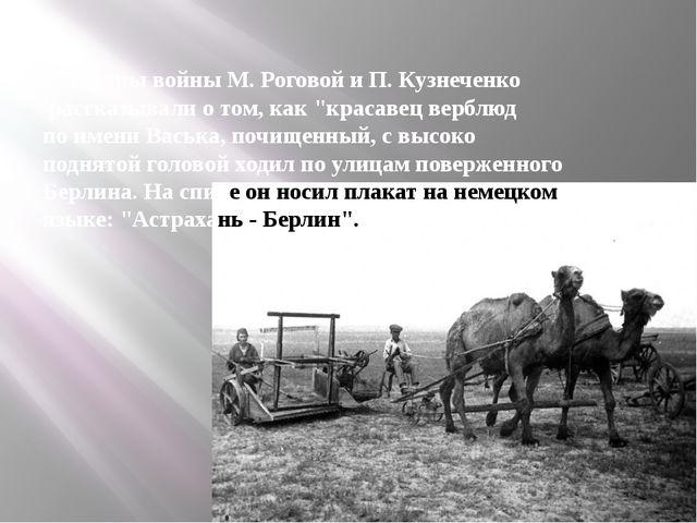 """Ветераны войны М. Роговой и П. Кузнеченко рассказывали о том, как """"красавец в..."""