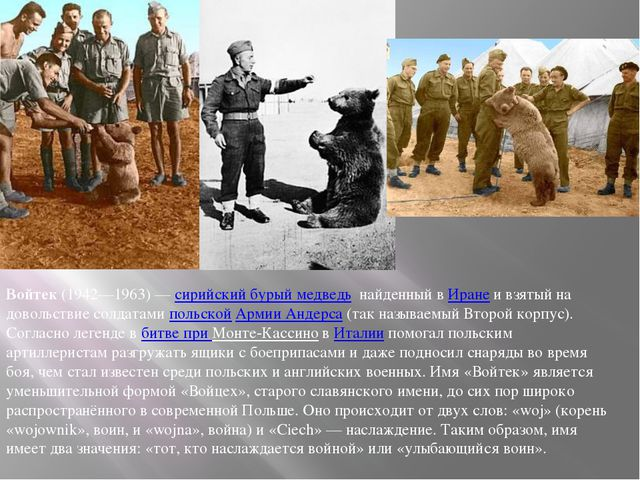 Войтек(1942—1963)—сирийский бурый медведь найденный вИранеи взятый на д...