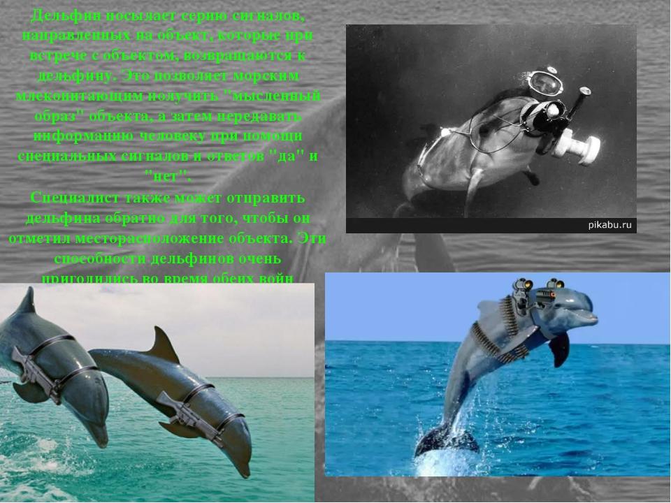 Дельфин посылает серию сигналов, направленных на объект, которые при встрече...