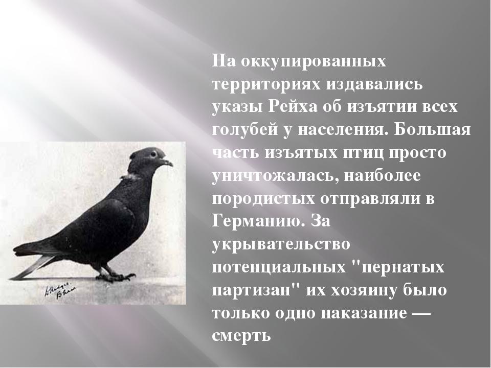 На оккупированных территориях издавались указы Рейха об изъятии всех голубей...