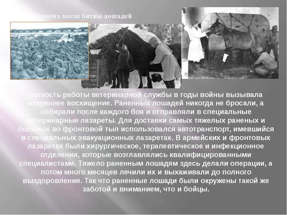 Четкость работы ветеринарной службы в годы войны вызывала искреннее восхищени...