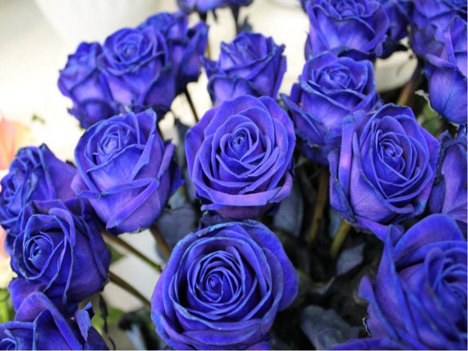 картинки цветы розы синие красивые это