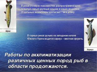 В горных реках ручьях на западном склоне Южного Урала водится хариус – местна