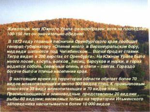 Животный мир Южного Урала разнообразен, хотя за последние 100-150 лет он знач