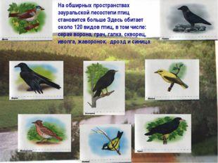 На обширных пространствах зауральской лесостепи птиц становится больше Здесь