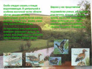 Особо следует сказать о птицах водоплавающих. В центральной и особенно восточ