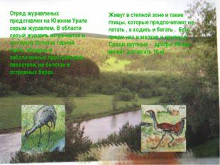 Отряд журавлиных представлен на Южном Урале серым журавлем. В области серый ж