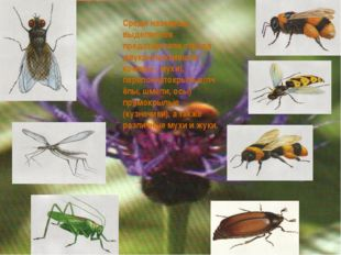 Среди наземных выделяются представители отряда двукрылых(мошки, комары , мухи