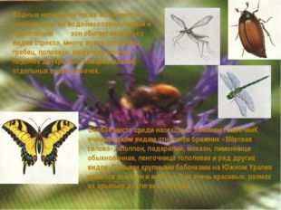 Водные насекомые также встречаются повсеместно. На водоёмах горно-лесной и ле