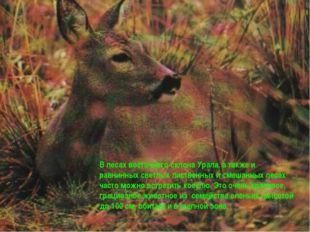 В лесах восточного склона Урала, а также и равнинных светлых лиственных и сме