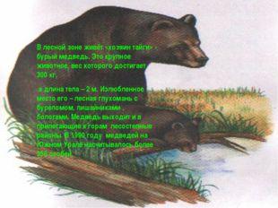 В лесной зоне живёт «хозяин тайги» - бурый медведь. Это крупное животное, вес