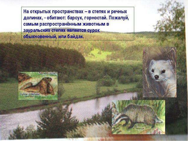 На открытых пространствах – в степях и речных долинах, - обитают: барсук, гор...