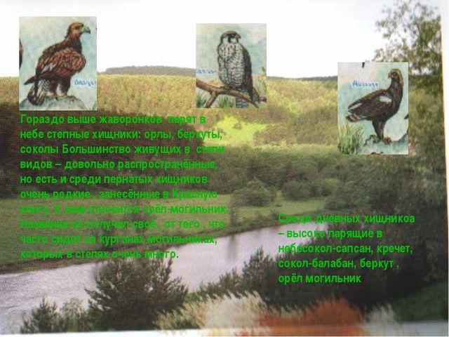 Гораздо выше жаворонков парят в небе степные хищники: орлы, беркуты, соколы Б...