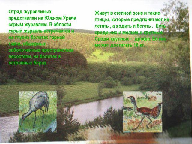 Отряд журавлиных представлен на Южном Урале серым журавлем. В области серый ж...