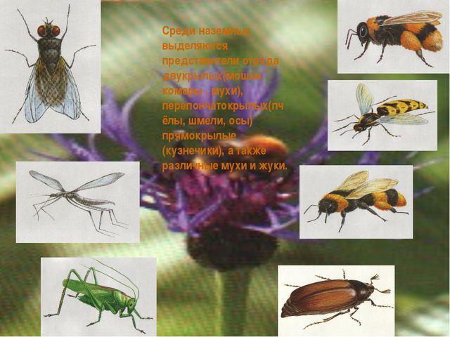 Среди наземных выделяются представители отряда двукрылых(мошки, комары , мухи...