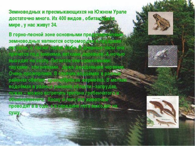 Земноводных и пресмыкающихся на Южном Урале достаточно много. Их 400 видов ,...