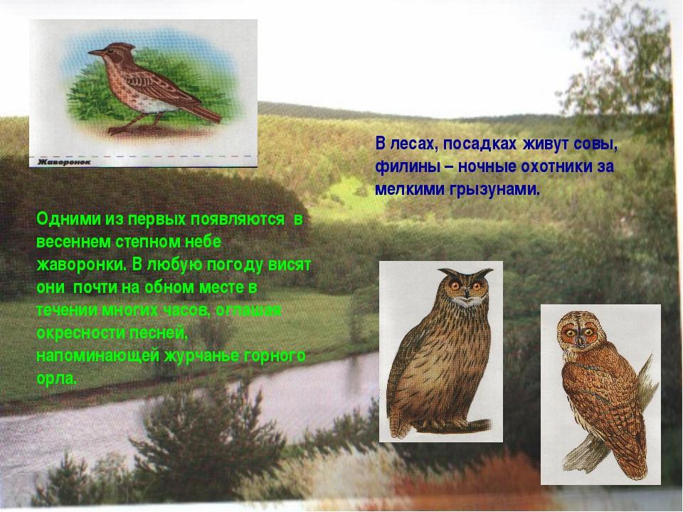В лесах, посадках живут совы, филины – ночные охотники за мелкими грызунами....