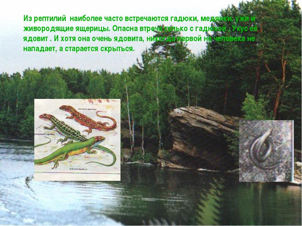 Из рептилий наиболее часто встречаются гадюки, медянки, ужи и живородящие яще...