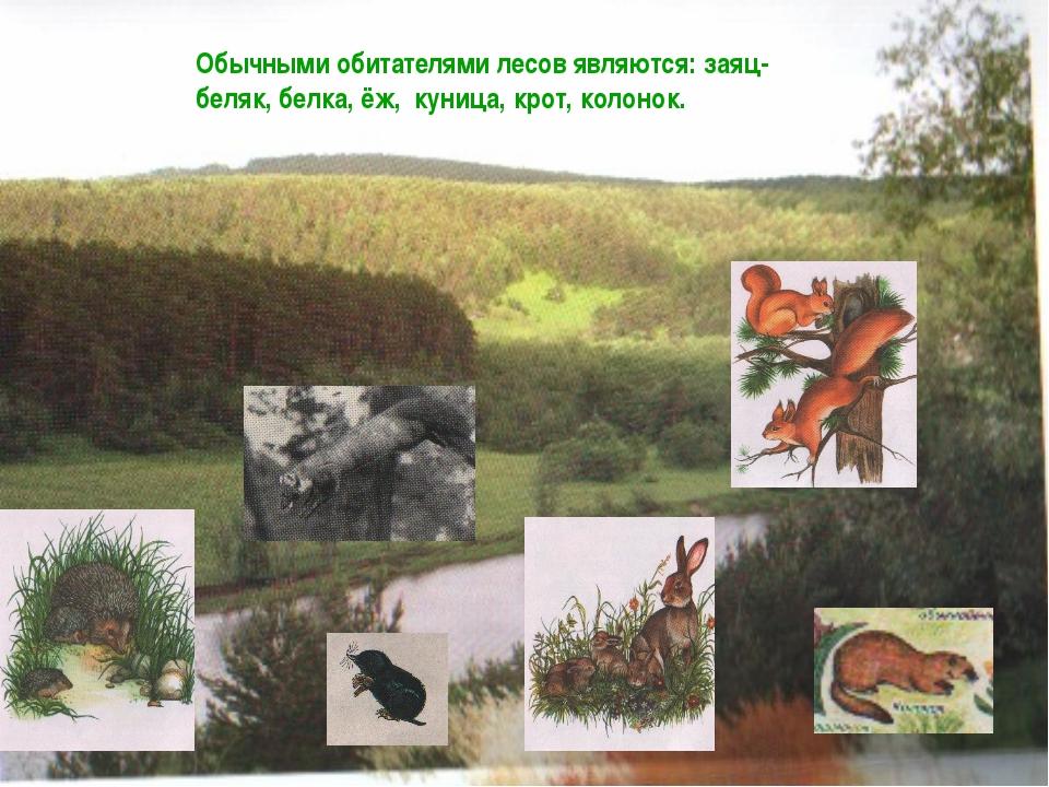 Обычными обитателями лесов являются: заяц-беляк, белка, ёж, куница, крот, кол...