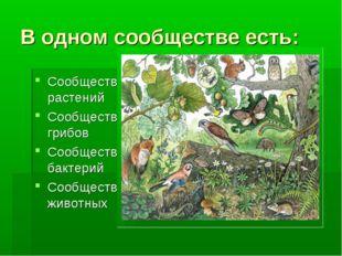 В одном сообществе есть: Сообщество растений Сообщество грибов Сообщество бак