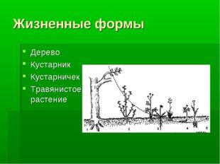Жизненные формы Дерево Кустарник Кустарничек Травянистое растение