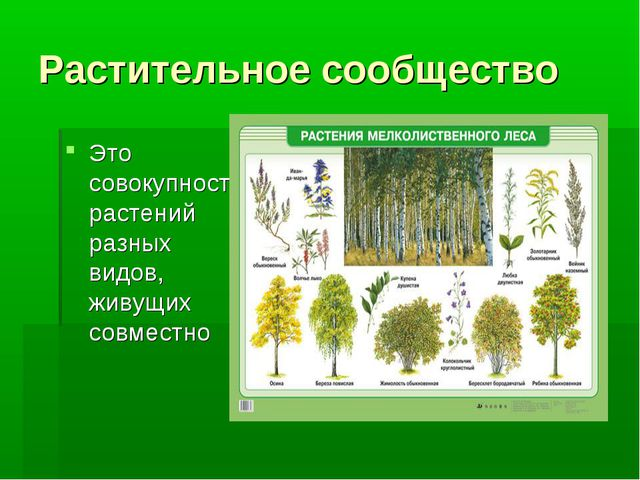Растительное сообщество Это совокупность растений разных видов, живущих совме...