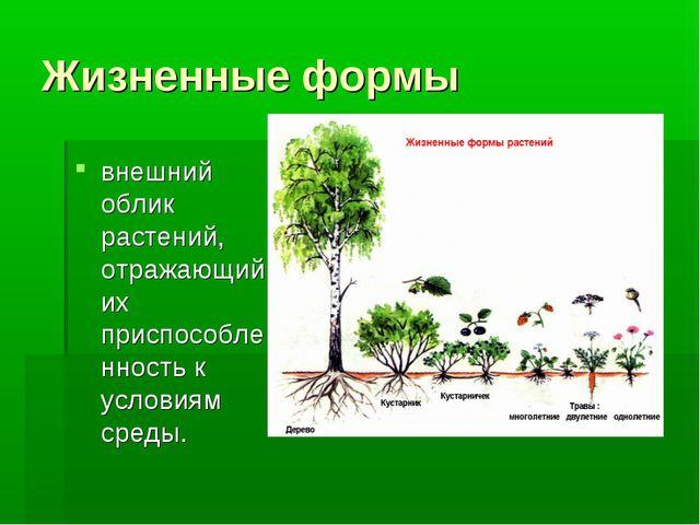 Жизненные формы внешний облик растений, отражающий их приспособленность к усл...