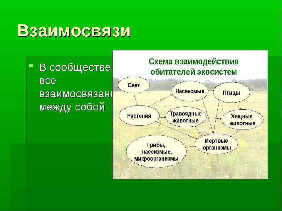Взаимосвязи В сообществе все взаимосвязаны между собой