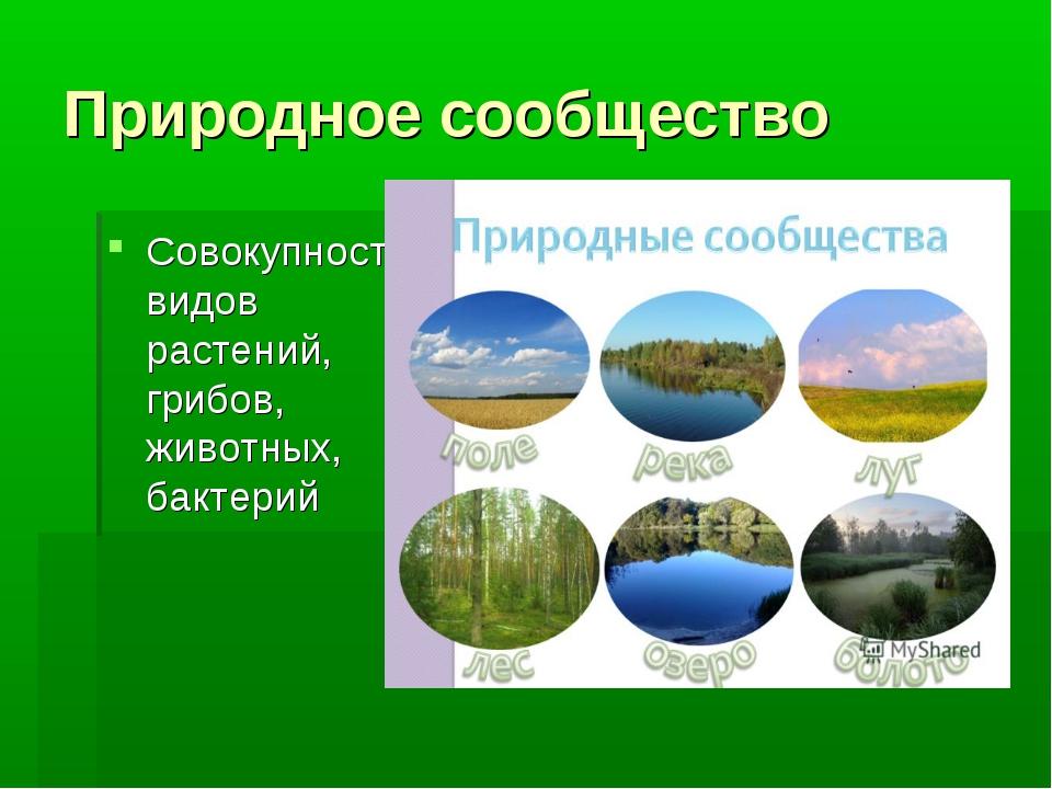 Природное сообщество Совокупность видов растений, грибов, животных, бактерий
