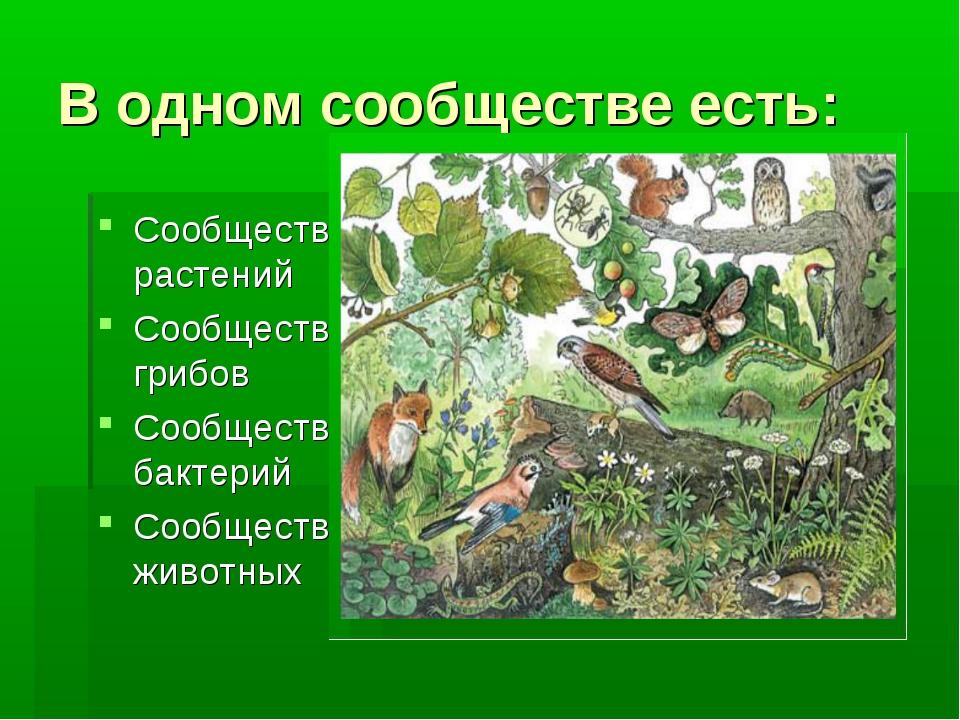 В одном сообществе есть: Сообщество растений Сообщество грибов Сообщество бак...
