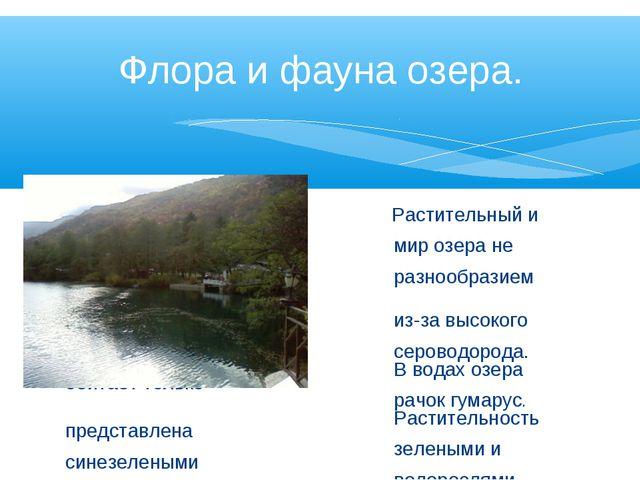 Растительный и животный мир озера не отличаются разнообразием из-за высокого...