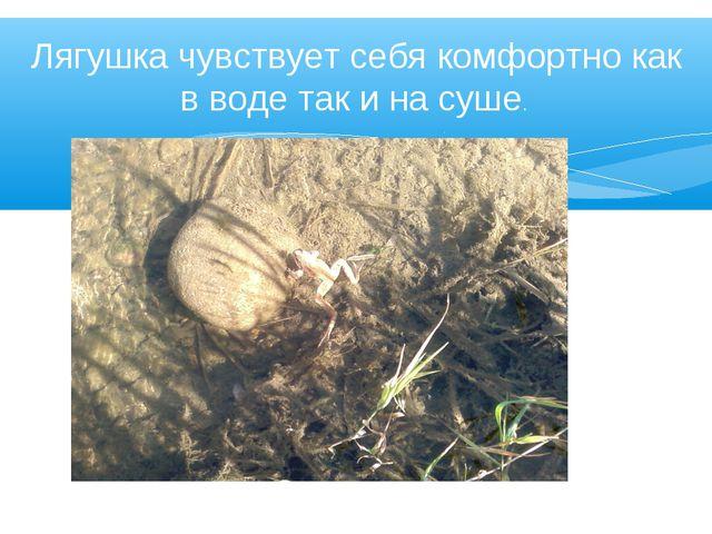 Лягушка чувствует себя комфортно как в воде так и на суше.