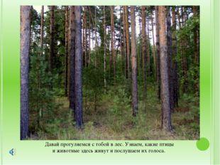 Давай прогуляемся с тобой в лес. Узнаем, какие птицы и животные здесь живут и
