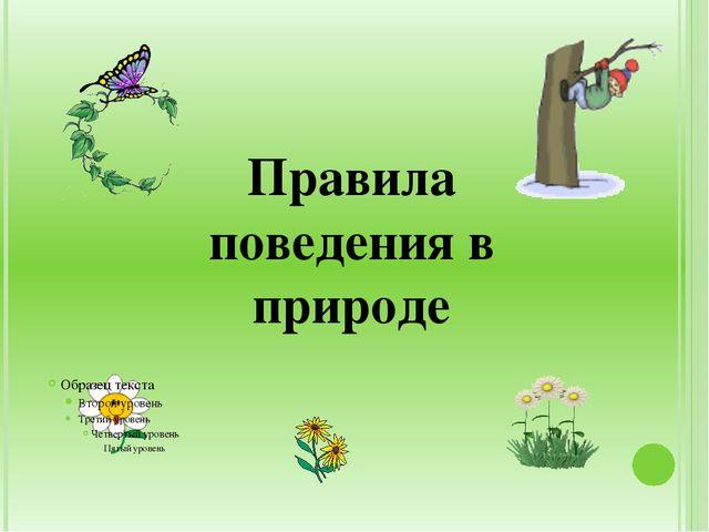 Правила поведения в природе