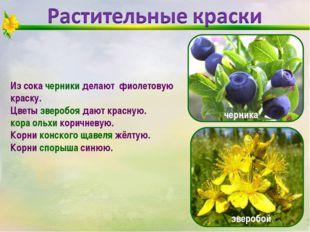Из сока черники делают фиолетовую краску. Цветы зверобоя дают красную. кора о