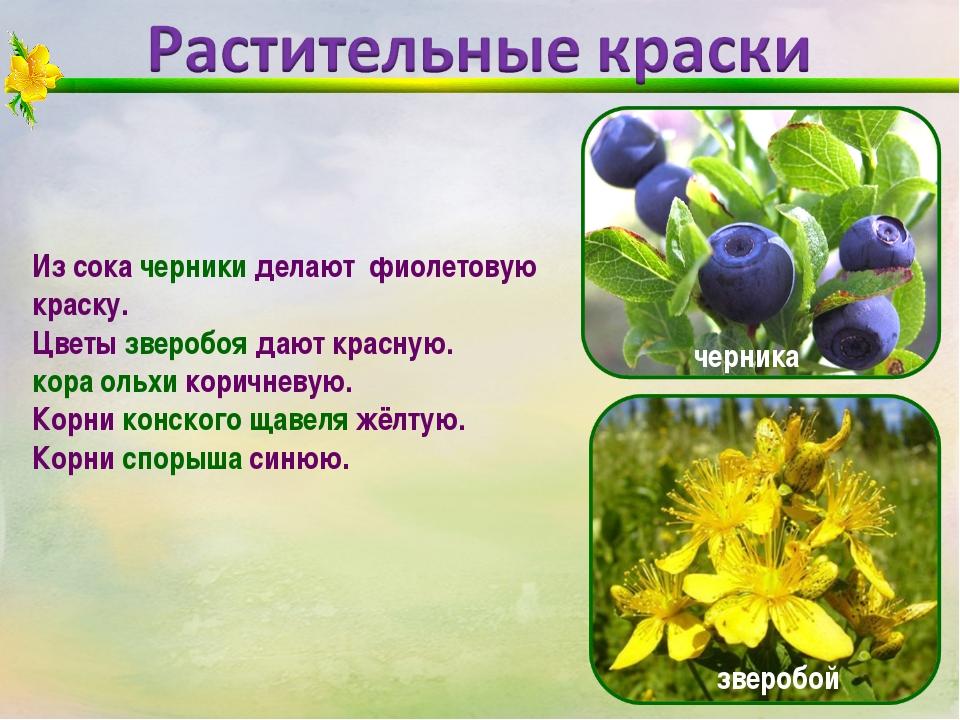 Из сока черники делают фиолетовую краску. Цветы зверобоя дают красную. кора о...