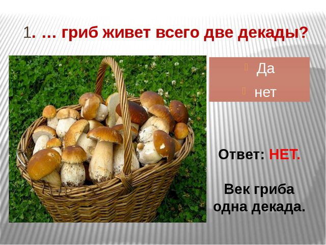 1. … гриб живет всего две декады? Да нет Ответ: НЕТ. Век гриба одна декада.