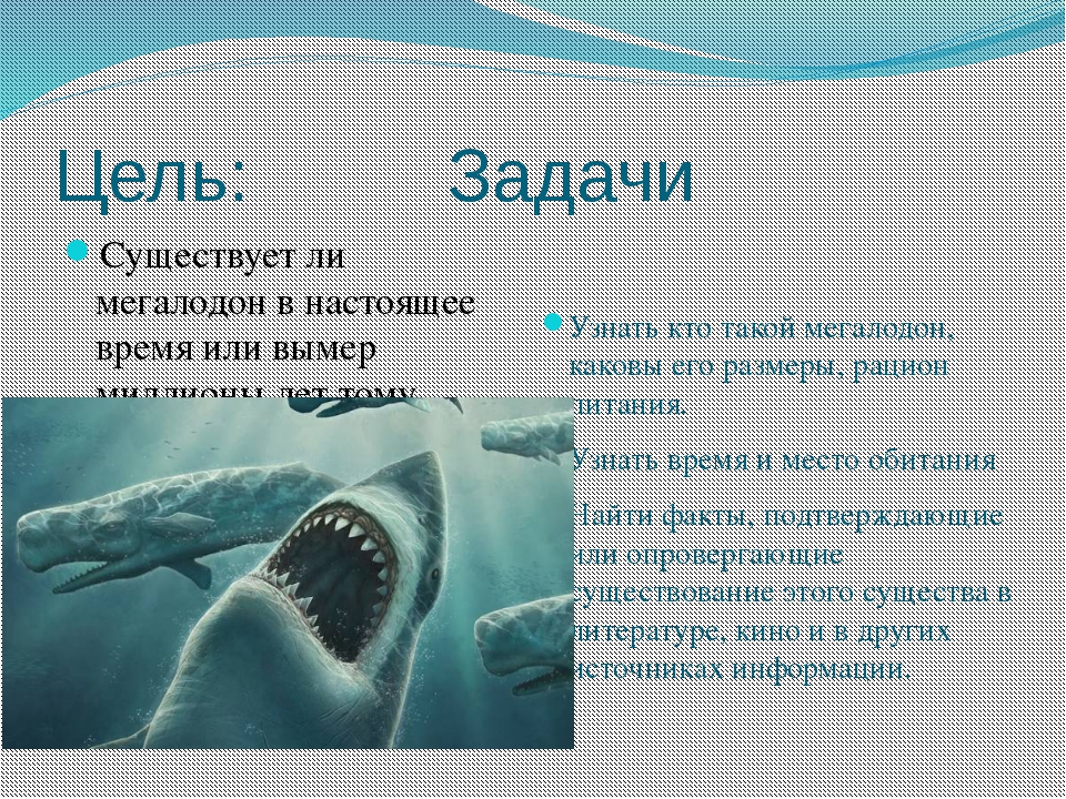презентация картинок про акул всё мощь
