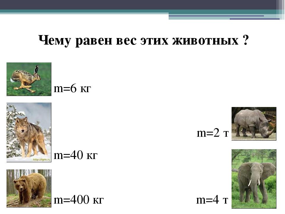 m=6 кг Чему равен вес этих животных ? m=40 кг m=400 кг m=2 т m=4 т