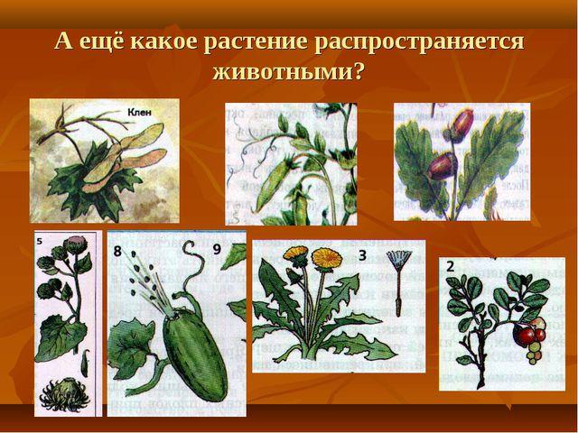 А ещё какое растение распространяется животными?