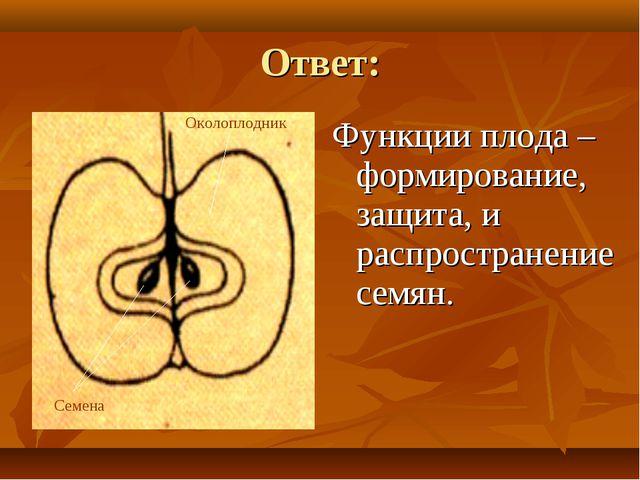 Ответ: Функции плода – формирование, защита, и распространение семян. Околопл...